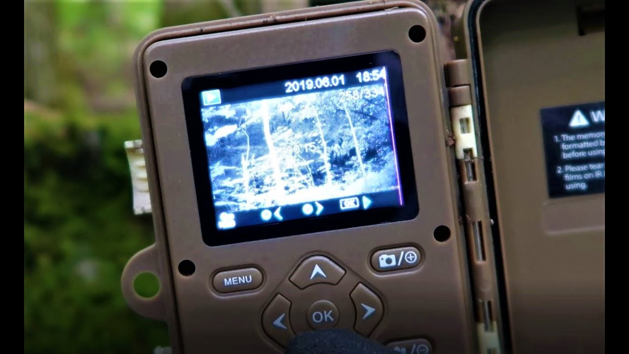 Trail Camera Check - Tresspassers and Big Bucks