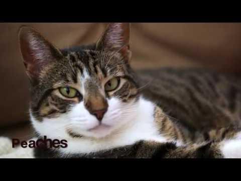 Cats - Rambling Cranky - Luke