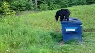 Booboo Bear raiding my garbage