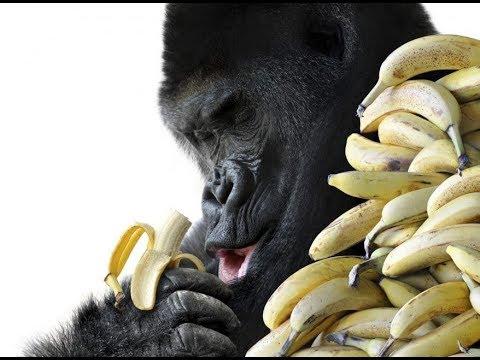 Lets Talk Bananas EP3 With Brandon Herrera