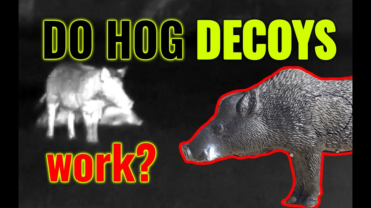 Hog Decoys & the power/curse of real-time trail camera intel
