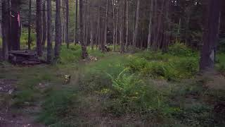 Stress Training in the Forest