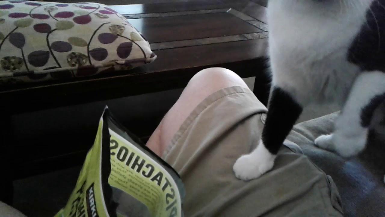 Lil' Bit likes Pistachios.