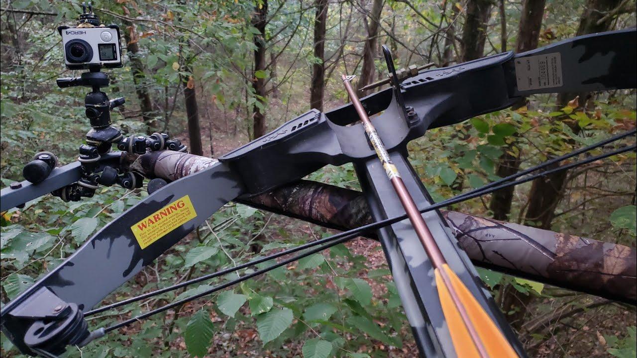 TN week 2 archery