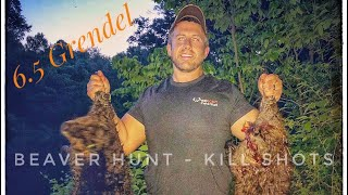 Beaver Hunting | Kill Shots | 6.5 Grendel