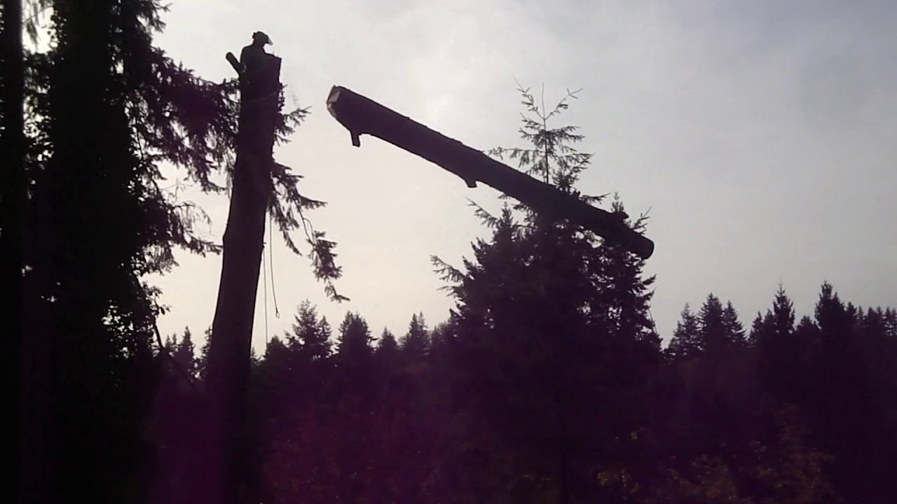 Taking down a Tree