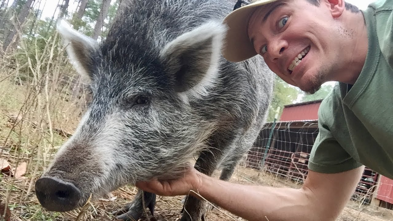 What's with the pig???  The Story of Nosler
