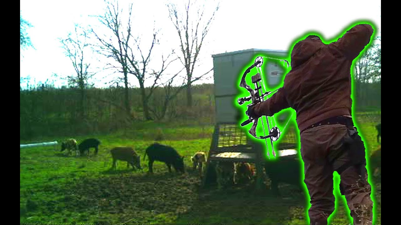 Daytime Hog Bowhunt & calling in piglets   Steyr Tactical Scout