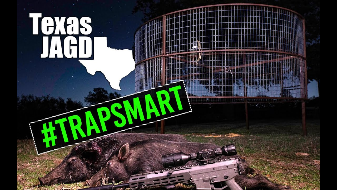 New Texas Hill Country Property & #trapsmart feral hogs avoiding traps