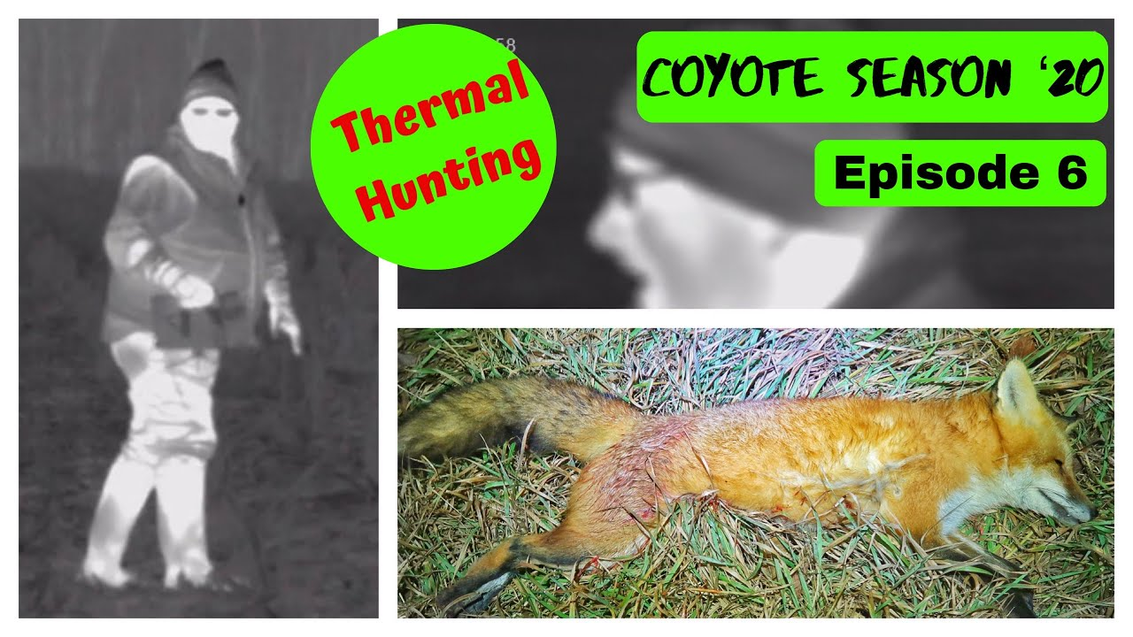 Hunting at Night with Thermal | Hunting Fox with Pulsar Thermion and Lucky Duck