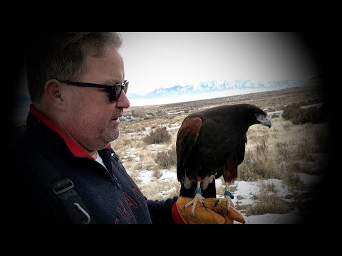 Hunting Rabbits With a Hawk (Falconry)